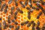 Pčele i hladnoća