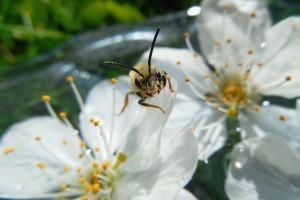 Svjetski dan pčela - 20. svibnja