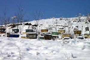 Radovi u pčelinjaku u decembru - treba li čistiti krovove od snijega?