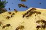 Pčelarima sporan način raspodjele poticaja