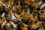 Dani pčela u Topuskom