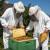 Pčelinjim otrovom do zdravlja i dodatnih prihoda