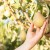 Šta je sve potrebno za jesenju sadnju kruške