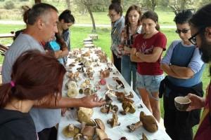 U Peckoj se razvija agroturizam, a dodatni prihod vide u sakupljanju i otkupu gljiva