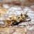 Kako suzbiti pepeljastog grožđanog moljca?