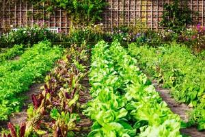 Zašto su važni zaštitni pojasevi u organskoj proizvodnji?