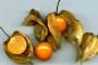 Usred Slavonije uzgajaju kiwano, goji bobice, peruanske jagode