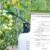 Gdje pronaći informacije o registraciji, korištenju i namjeni pesticida? U FIS bazi