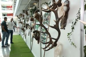 Otkriveno davno izgubljeno srpsko lovačko blago!