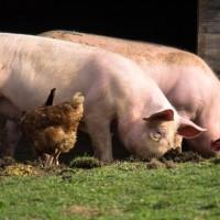 Program potpore za sufinanciranje rada uzgojnih udruženja u području stočarstva