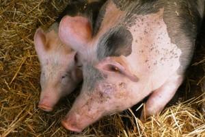 Prijavite se za subvencije u poljoprivredi do kraja godine!