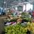 RZS: Veća ukupna vrednost prometa poljoprivrednih proizvoda, ali manja na pijacama