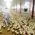 Preventivne mere u suzbijanju kokcidioze živine nemaju alternativu