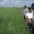 Novi tretmani sjemena na Pioneer hibridima uljane repice