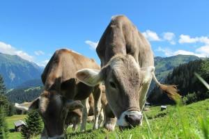 Koje su najznačajnije zoonoze u Hrvatskoj i kako ih spriječiti?