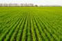 PKB posejao pšenicu na 3.324 hektara