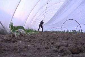 Složnim radom braća Panić odolevaju izazovima povrtarske proizvodnje