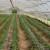 Dvadeset poljoprivrednika u Rudom bogatiji za plastenike - projekat vrijedan 50 hiljada KM