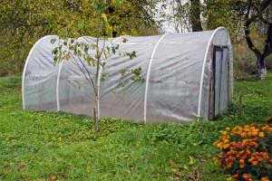 Povrtarska proizvodnja tokom zime i u plastenicima i na otvorenom