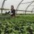 Pripremite se pravilno za zimsku proizvodnju povrća u zaštićenom prostoru