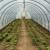 Raspisan je Javni poziv za dodjelu plastenika za uzgoj povrća