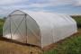 Zaštitite osjetljivo bilje od hladnoće i glodavaca