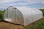 Uzgoj povrća u plastenicima profitabilniji