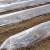Sve što treba da znate o plastičnim tunelima za ranu proizvodnju povrća