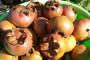 Kako uzgajati mušmulu - zaboravljeno voće?