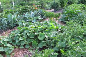Plodored je važan jer promjena godi biljkama, čuva ih od štetnika, obogaćuje zemlju i osigurava visoke prinose
