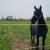 Toplokrvne pasmine konja: Za koje mjere se mogu ostvariti potpore?