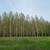 Šumarske institucije: Godinama se svaka sječa šuma zlonamjerno proglašava devastacijom