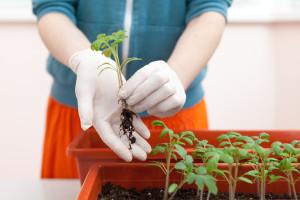 Besplatno će dijeliti rasad biljaka u Banja Luci