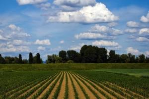 Isplaćeni podsticaji za poljoprivrednu proizvodnju u tekućoj godini