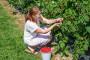 Podsticaji za nove zasade jagodičastog voća