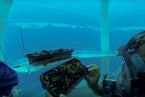 Podvodna poljoprivreda bi mogla iskorijeniti svjetsku nestašicu hrane?