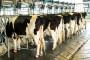 Zabilježena pojava aflatoksina na nekoliko farmi