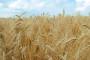 Reforma poljoprivredne politike utjecat će na cijene zemljišta u EU