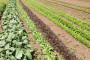 Prijete poplave, a poljoprivrednici još bez osiguranja
