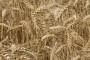 Putem AGRONET-a 30 000 poljoprivrednika popunilo zahtjev za izravna plaćanja