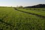 Centar za poljoprivredu treba premjestiti u Osijek