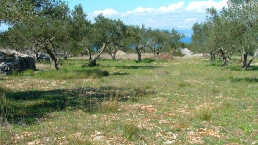https://cdn.agroklub.com/upload/images/text/thumb/poljoprivredno-zemljiste-brac-03-880x495.jpg