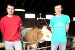 Nesuđeni sveštenici na Murtenici proizvode mleko i gaje krave muzare
