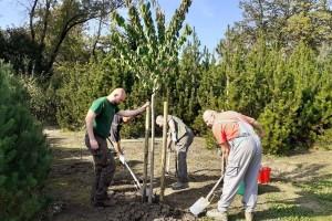 Kolektivna sadnja drveća se nastavlja, rezultati više nego zadovoljavajući