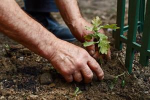 Šumske sadnice: O upotrebi drveća razmišljajte prije sadnje