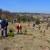 Pošumili tri hektara belim borom: Najmlađi akcijaš 14, a najstariji 77 godina