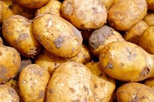 Ostali bez godišnjeg roda krompira jer ne znaju da upravljaju rekama?