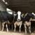 Bez poticaja bh. farmeri bi propali, naročito mljekari?