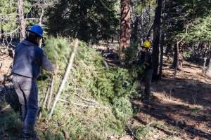 Masovno se suše šume u USK - kriv je potkornjak