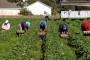 Ulaganje u poljoprivredu privuklo nove proizvođače